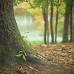 Ładny i {porządny zieleniec to nie lada wyzwanie, szczególnie jak jego konserwacją zajmujemy się sami.